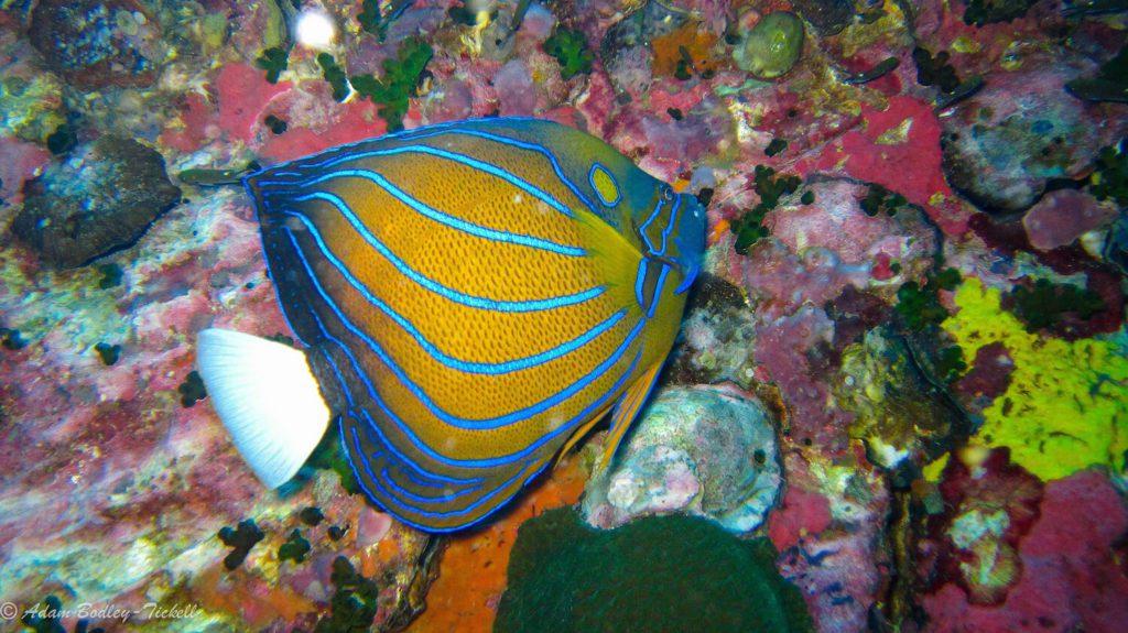 Fish Koh Tao