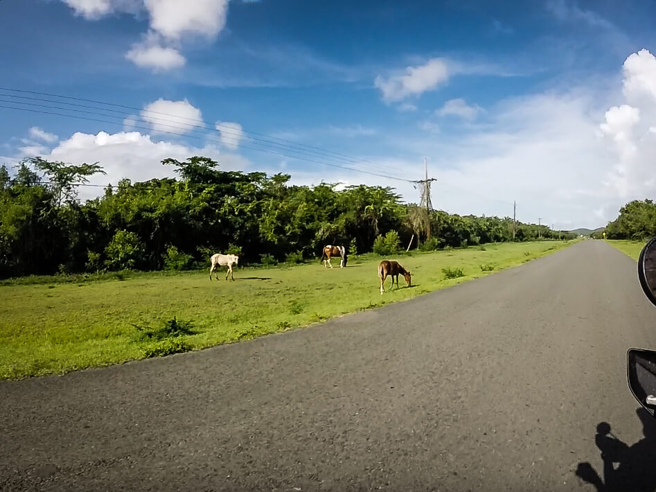 Vieques Island countryside