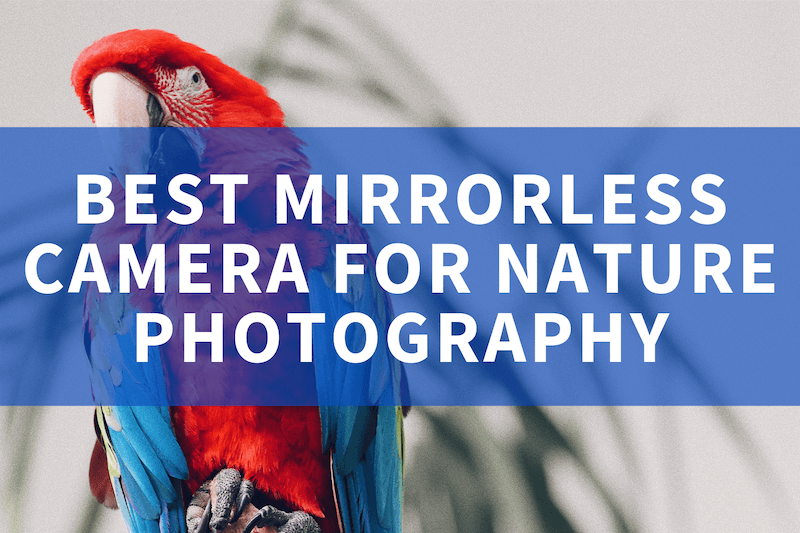 Best mirrorless camera for nature photography