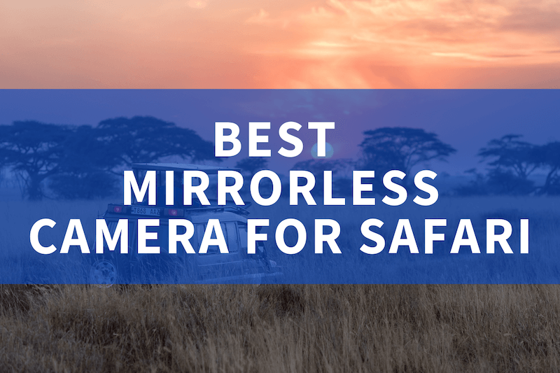 Best mirrorless camera for safari