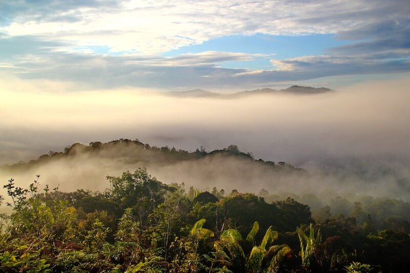 Aerial view over a rainforest in Borneo